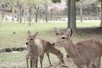 鹿にもいろいろ・・・