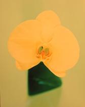 何千首に及ぶ雨宮雅子さんの作品から、花にちなんだ短歌を抜粋、