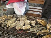 新鮮な牡蠣をジュージュー焼いて食べます