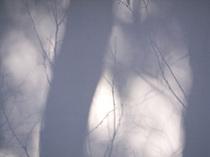 森雅美(MASAMI MORI)「小石川後楽園-1」