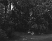 KOICHI OKUWAKI「ゲーテが見た植物園」3月27日(金)からスタートです