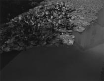 「ゲーテが見た植物園」(「ORTO BOTANICO DI PADOVA」KOICHI OKUWAKI)はすべてゼラチンシルバープリント(KOICHI OKUWAKI)