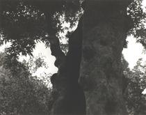 デジカメやケータイで写真を撮るのが当たり前の現在ですが「ORTO BOTANICO DI PADOVA」KOICHI OKUWAKI