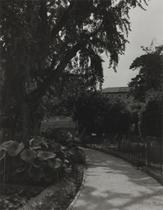 「見知らぬ草木の間を逍遥することは愉快でもあり、有益でもある」(ゲーテ『イタリア紀行』)
