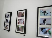 黒猫ブログつながりのみなさんの写真展