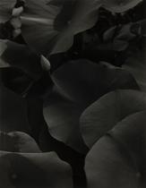 「ゲーテが見た植物園」