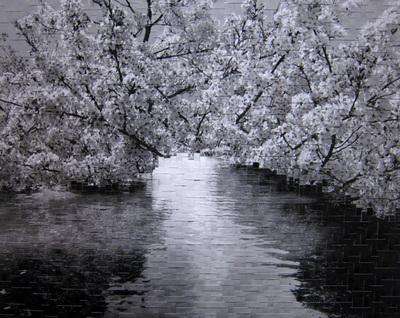 今年の桜もそろそろおしまい