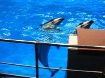 ホテルに隣接された水族館のイルカです