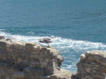 リヴィエラ海岸にある・・・