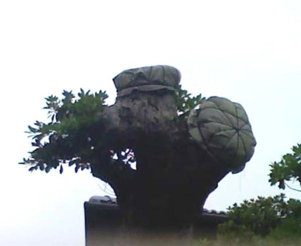 「木になる帽子」